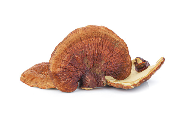 Diamond Interest USA - Lingzhi Mushroom Ganoderma Lucidum
